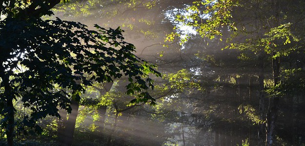 forest-470531_640