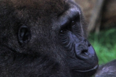 dier-animal-dieren-3136917-m