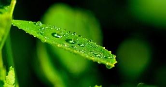 nature-591708__180