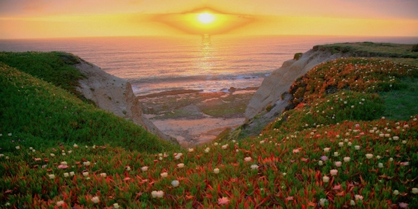 sunset_earthday_iceplant_677600_h