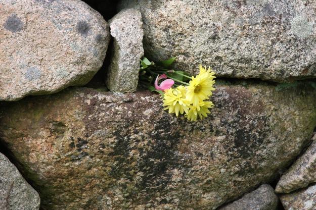 flower-in-wall-1239508_1920.jpg