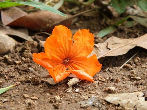 orange-184838_1280.jpg