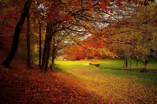 autumn-1072827_1920.jpg