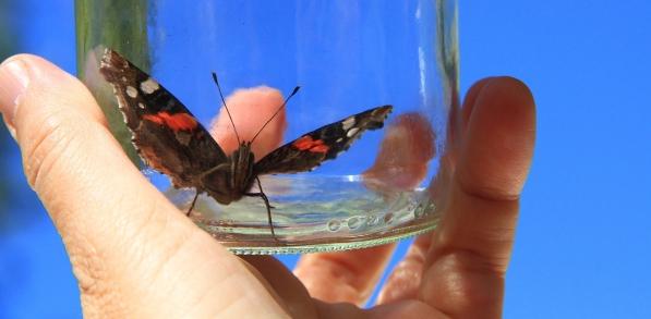 butterfly-761637_1920